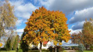 Pukaro, kylä Itä-Uudellamaalla